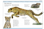 Cheetah - Textbook Mockup